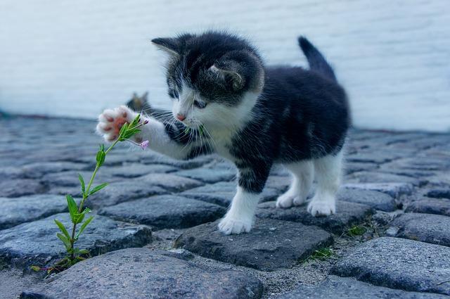 מביאים הביתה חתול
