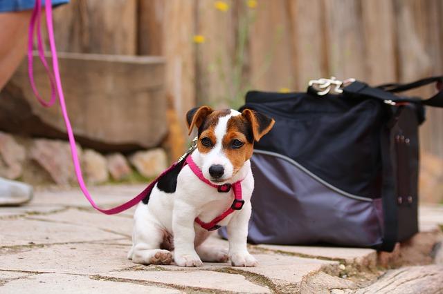 סירוס כלבים, באיזה גיל ולמה זה חשוב