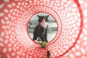 מתנות לאוהבי חתולים