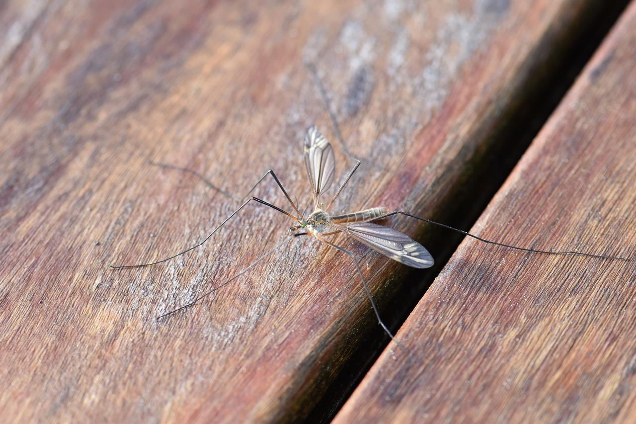רשתות נגד יתושים