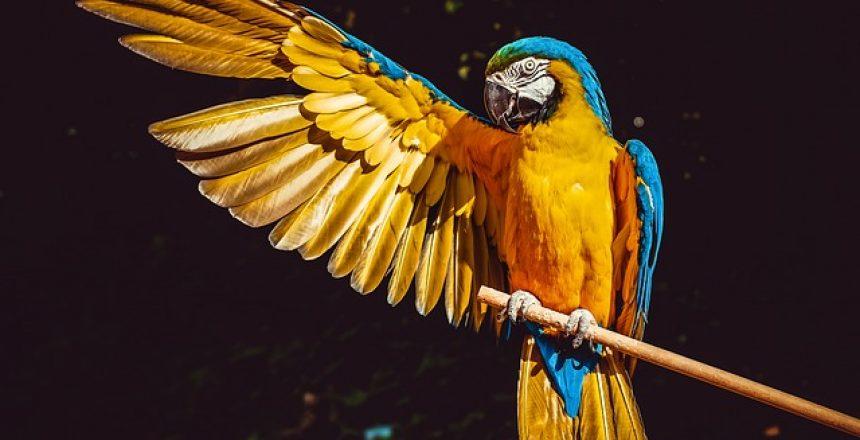 גידול ציפורים