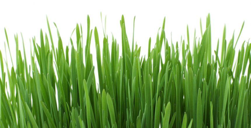 דשא סינטטי פרופיקס