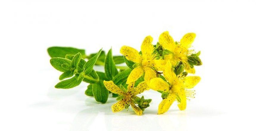 חיזוק לבידו בעזרת צמחי מרפא
